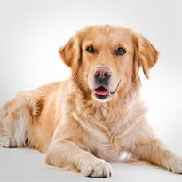 hund-kreis