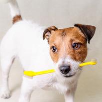 Zahnheilkunde Hund