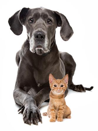 start-hund-katze
